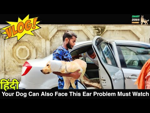 Dog Common Ear Problem You Must Know || Pet Care And Training Vlog