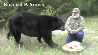 Best Black Bear DVD, Field Judging - YouTube