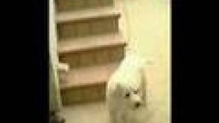 kimba - il leone bianco