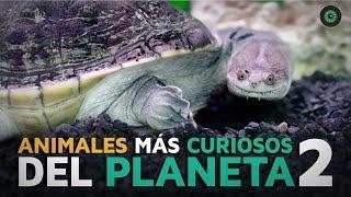 Los animales más curiosos del planeta 2
