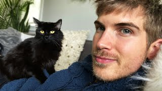 Meet My New Pregnant Cat