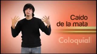 Video Diccionario de LSV 3er tomo Módulo Coloquial