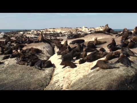 Boat Trip to Seal Island (Hout Bay – South Africa)