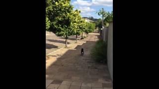 Vídeo de cachorrinho que busca a própria ração no petshop viraliza na web