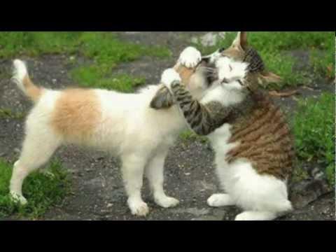 Come Evitare Le Zuffe Tra Cane E Gatto Animali Dal Mondo