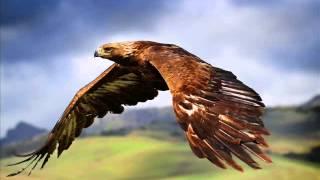 ♫♪ Kondorov Let ♫♪
