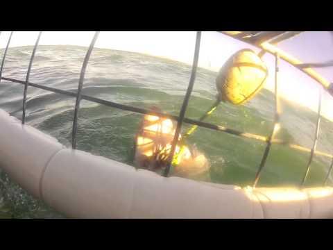 Shark Attack Cage (GoPro)