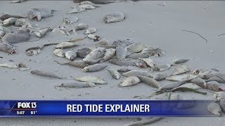 Red tide explained: What is it, and where does it come from?