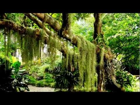 大自然音樂 Nature music -晨歌 (森林狂想曲)Morning song (forest Rhapsody) - YouTube
