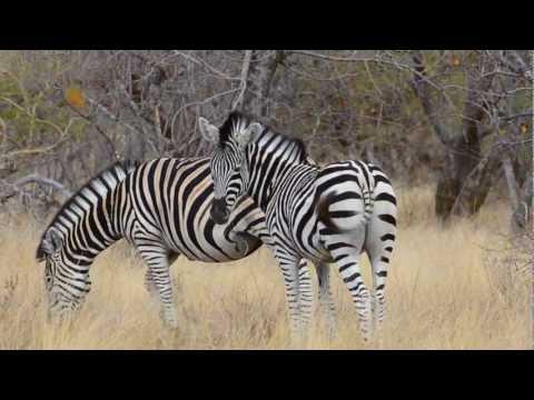 African Adventure 2012
