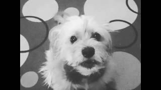 Dog reaction on sad naruto song