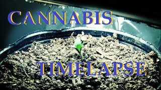 Time Lapse (Marijuana) / Motivation