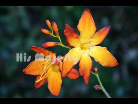 Trecanna Nursery South African Plants 2009