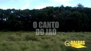 O CANTO DO JAO