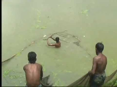 NAT FISHING IN NABIGONJ BANGLADESH