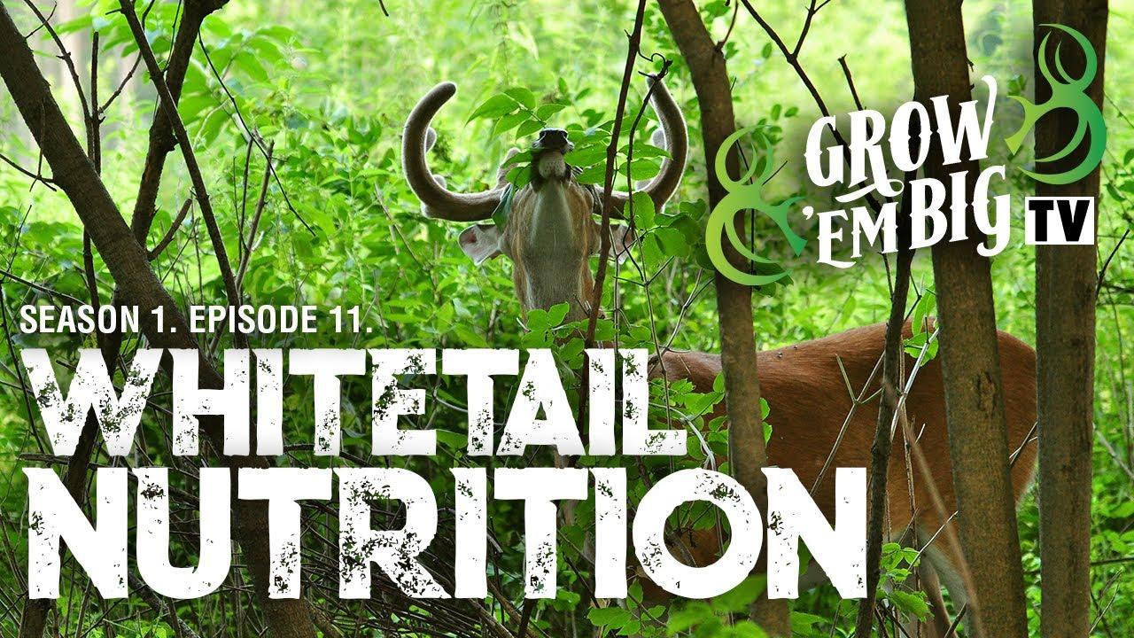 Whitetail Nutrition   Grow 'em Big TV