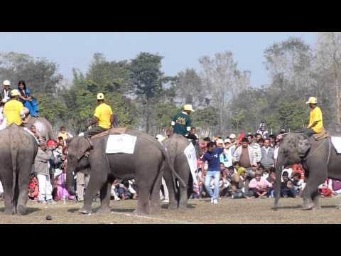 Elephant Football – kick off to goal. Chitwan NP Nepal.