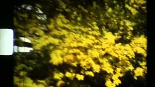 Bibio •'Cherry Blossom Road'