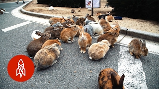 The Mystery of Rabbit Island