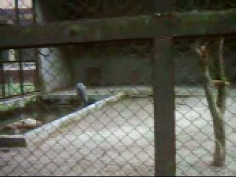 Our National Zoo_Ep 16