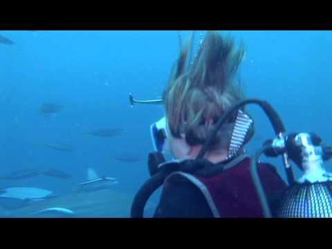 Shark Dive for the Bentleys