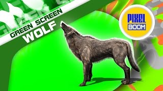 Green Screen Wolf Walking Howl Animal - Footage PixelBoom