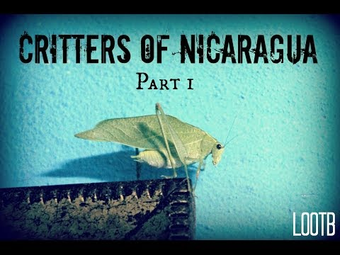 Critters of Nicaragua Part 1