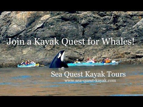 Killer Whale Kayaking Tours - San Juan Islands - Kayak with Orcas!