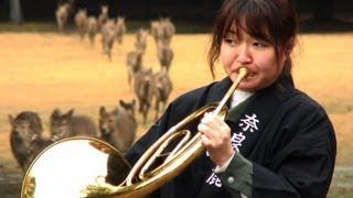 Música clássica para animais