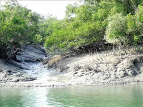 Sundarbans In Bangladesh