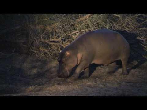 Afrique du Sud safari de nuit dans la réserve de Kapama