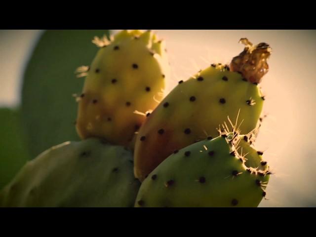 Video oficial de Come Out Tonight de Go Cactus