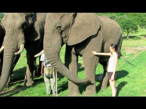 Elephants of Eden in South Africa