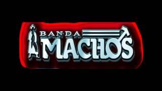 Banda Machos   No soy monedita de oro