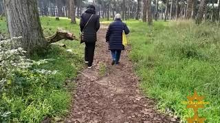Passeggiata in Pineta - A Walk In The Pinewood Of Ostia (Rome)