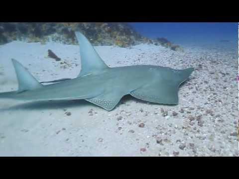 Aqua Planet – Shark Diving on Protea Banks