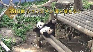 ☆ Cute Panda ☆ #26 今日も可愛く滑り落ちる♡
