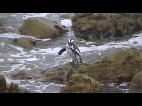 Zuid Afrika 7 – Swellendam – Cape Algulhas – Hermanus – Bettys Bay Penguins
