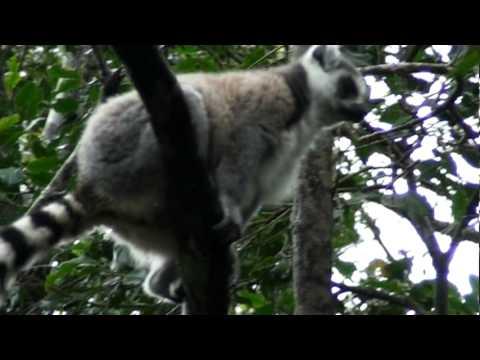South Africa – Part 14 – Monkeyland – Plettenberg Bay