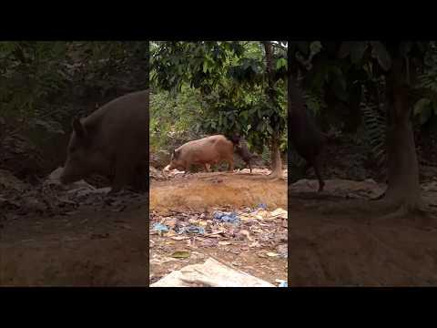 Download Video Animal