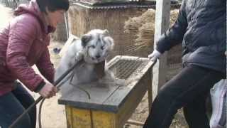 Never Before Seen Footage: Olivia Munn Reveals Graphic Chinese Fur Farm Exposé