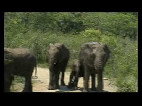 South Africa 2006 Hluhluwe Reserve Durban (3)