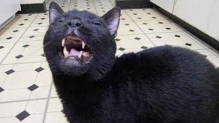 Talking Kitty 36 - Catnip Withdrawals