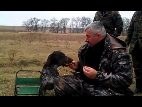 Apportieren in der Ukraine   Win Video