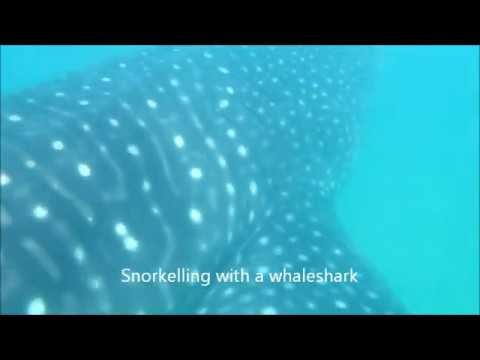 Whaleshark and devilrays
