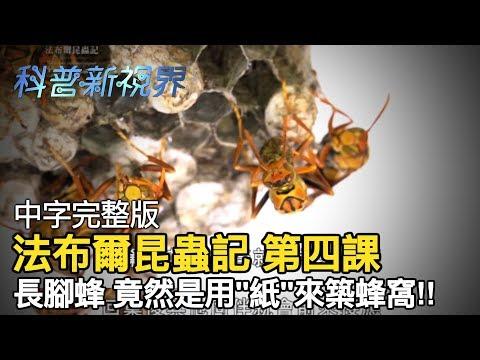 激昂的生命   蜜蜂的蜂巢竟然是用紙做的!!????更有一種只愛獨居堅持不合住的蜜蜂種類【法布爾昆蟲記 第四課】全片線上看 - YouTube