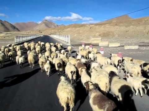Cycling in Tibet Nepal Friendship Highway (Shegar to Tingri)