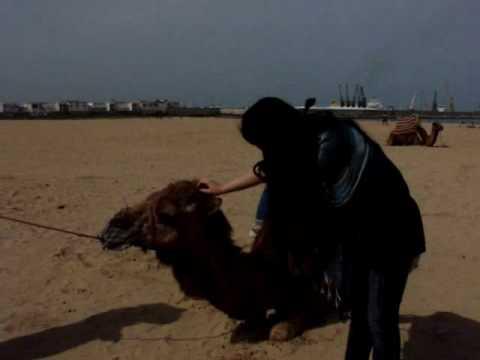3 days in Morocco (Tanger) with Grazi & Stella