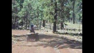 Mormon lake trail