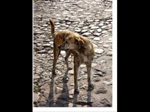 torch-perro-callejero-torch-punk